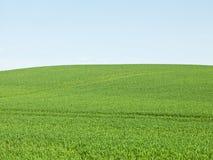 Green Field Stock Photos