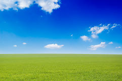 The green  field Royalty Free Stock Photography