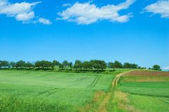 Green field 3. Bright green field under blue sky with clouds Stock Image