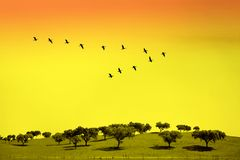 Green field. With trees and birds in classic V formation Royalty Free Stock Image