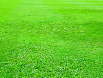 Green field. Filed background royalty free stock photography