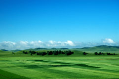 The green field. And white cloud Royalty Free Stock Image