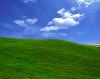Green field. In the summer stock photos