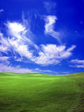 Green field. Beautiful green field Royalty Free Stock Photos
