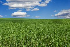 Green field. Beautiful green field Royalty Free Stock Photo