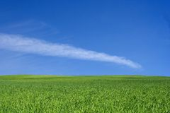 Green field. Beautiful green field Stock Photos