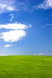 Green field. Beautiful green field stock images