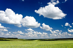 Green field. Freedom, green field, the sky, clouds stock photography