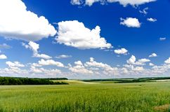 Green field. Freedom, green field, the sky, clouds Royalty Free Stock Photo