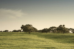 Green field. Beautiful landscape with a green field at Alentejo, Portugal Royalty Free Stock Photos