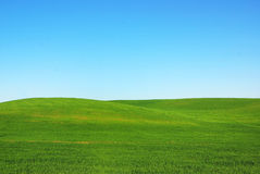 Green field. Royalty Free Stock Photo