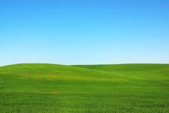 Green field. Royalty Free Stock Photo
