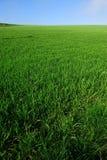 Green Field Stock Image