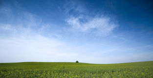Green field. A beautiful view of a green field and deep blue sky Stock Images