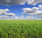 Green field Stock Photography