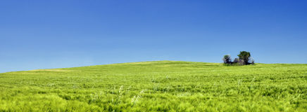 A green field Royalty Free Stock Photography