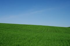 Green field. Green spring field and fine sky landscape Royalty Free Stock Photo
