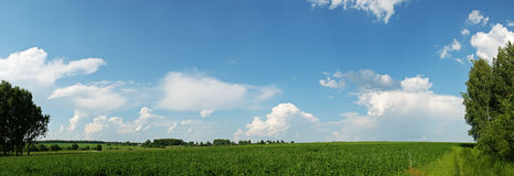 Green Field. Panoramic view of the green field and beautiful sky with clouds Royalty Free Stock Image