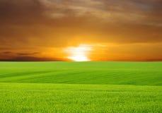 Green field. And beautiful sunset Royalty Free Stock Photo