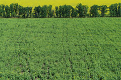 Green field . Royalty Free Stock Photo
