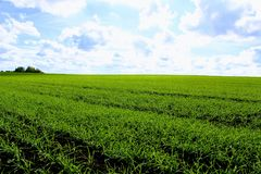 Green field against a clear blue sky and snow-white clouds stock photos