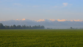 Green field against foggy forest and snowy mountains Royalty Free Stock Photos