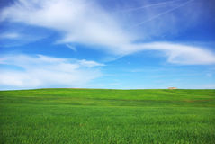Green field of Alentejo. Royalty Free Stock Images
