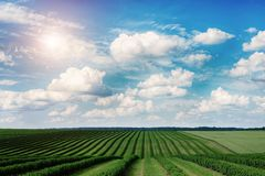 Free Green Field And Blue Sky. Awesome Landscape Stock Images - 157078274