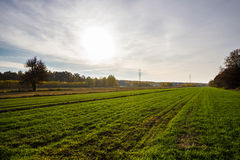 Green field. In the autumn Royalty Free Stock Photography