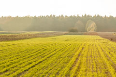 Green field. In the autumn Royalty Free Stock Photo
