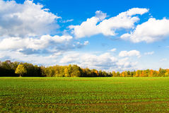 Green field in autumn. With blue cloudy sky Royalty Free Stock Photo
