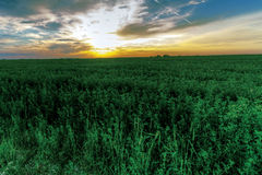 Green field on a background of a beautiful sunset Royalty Free Stock Photos