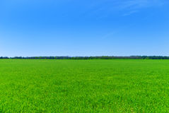 Green field on the background of blue sky Royalty Free Stock Photography