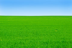 Green field on the background of blue sky. Stock Images