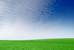 Green field on the background of the blue sky. Royalty Free Stock Images