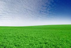 Green field on the background of the blue sky Royalty Free Stock Images