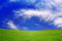 Green field  background. Stock Image