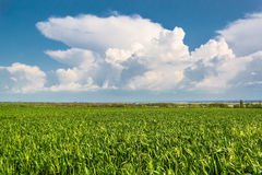 Green field on the background of blue sky Royalty Free Stock Photos