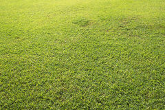 Green field background or wallpaper. Sunny day at the football field. Royalty Free Stock Photo