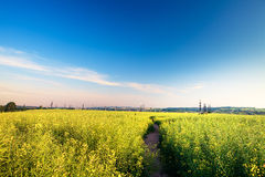 Green field. Beatiful morning green field with blue heaven Stock Photo