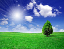 Green field beautiful Royalty Free Stock Photo