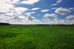 Green field and beautiful blue cloudy sky with light clouds. Stock Photos