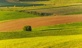Green field. Beautiful field landscape in morning sunlights Royalty Free Stock Photos