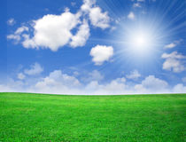 Green field beautiful, nature Royalty Free Stock Image
