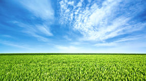 Green field and beautiful sky Royalty Free Stock Photo