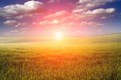Green Field. And Beautiful Sunset Stock Image