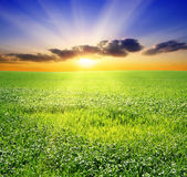 Green field and beautiful sunset Stock Photography