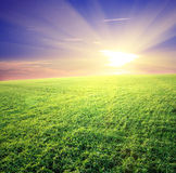Green field and beautiful sunset Royalty Free Stock Image