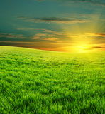 Green field and beautiful sunset royalty free stock photo