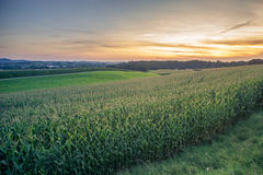 Green Field and Beautiful Sunset with a corn field in the foreground. Stock Photo